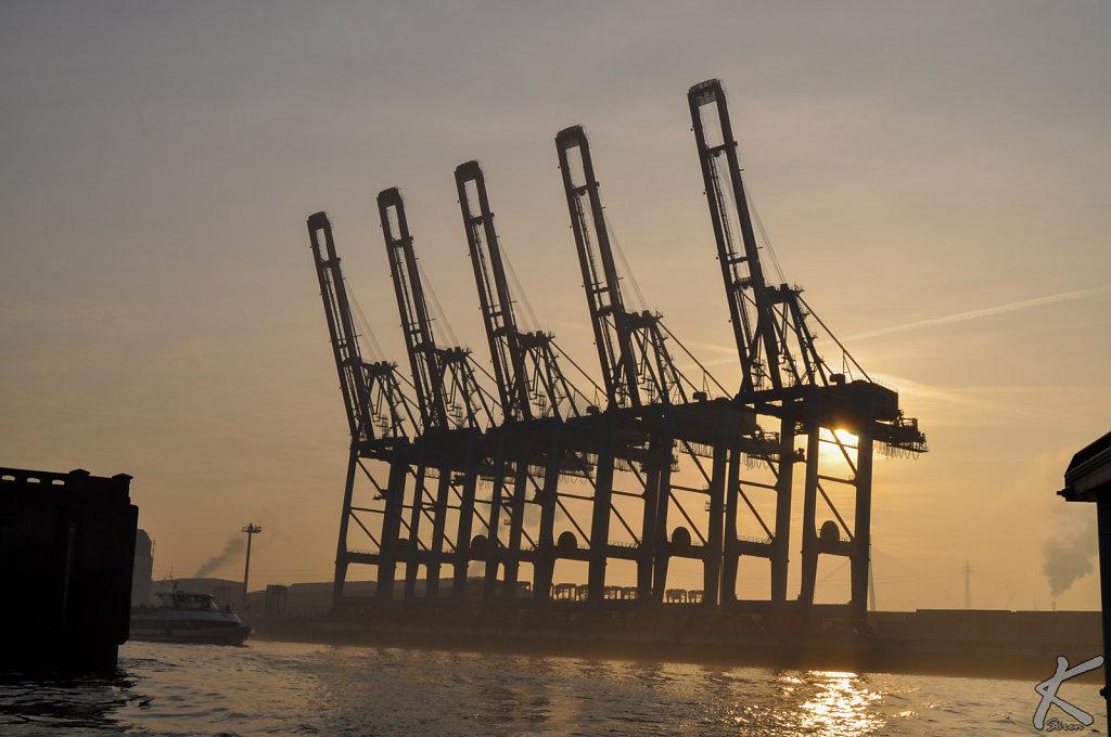 Kräne am Containerterminal