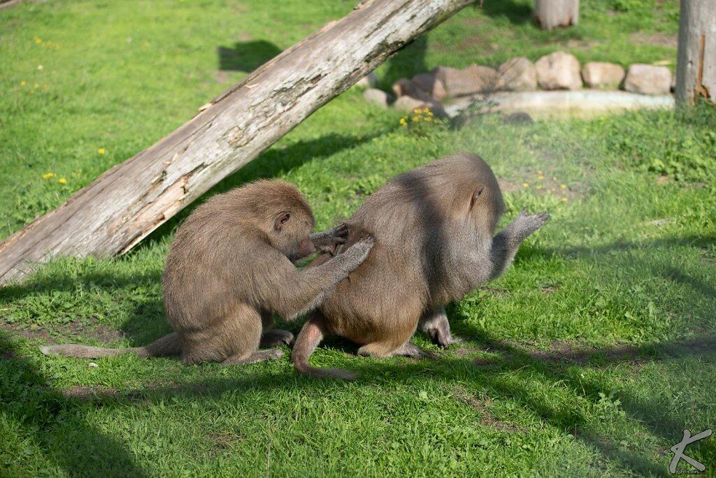 20180913-1350-Blavand-Zoo-0004.jpg
