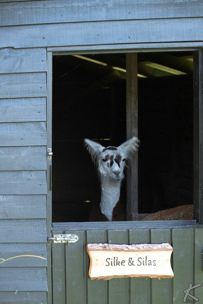 20180913-1412-Blavand-Zoo-0006.jpg